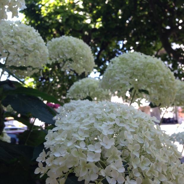 fleurs hopital